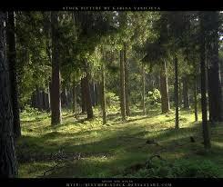 صور غابات روووعة images?q=tbn:ANd9GcR