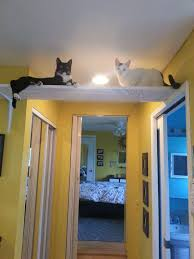 two cats in a wall shelf