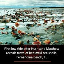 First Low Tide After Hurricane Matthew Reveals Trove Of