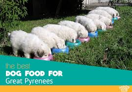 Best Dog Food For Great Pyrenees Optimal Diet And Schedule