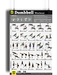 dumbbell exercises workout poster now laminated home gym workout plans for men