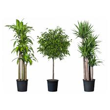 tall office plants. TROPISK Potted Plant Tropical Assorted Species Plants Diameter Of Pot 12 Tall Office M