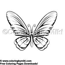 Elegant Butterfly Coloring Page 2149 Coloring By Miki