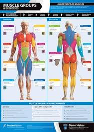 Gym And Fitness Chart Muscle Groups And Exercises L