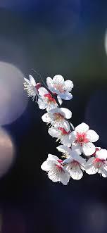 mq24-spring-flower-sakura-nature-tree ...
