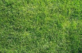 weed control chesapeake va