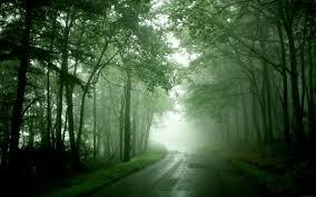 「森の中 道」の画像検索結果
