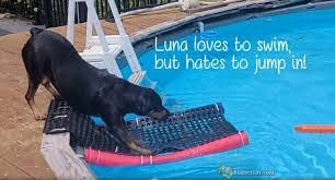 how to make a pool ladder for dogs by