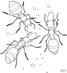 Small Picture Allegheny Mound Ant coloring page Free Printable Coloring Pages