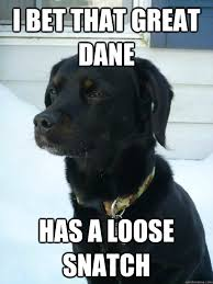 i bet that great dane has a loose snatch - Philosophical Puppy ... via Relatably.com