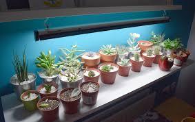 Succulent Grow Light Setup Bigger Shelf And New T5 Light Room For More Plants Yay