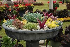 Small Picture 50 Best Succulent Garden Ideas for 2017