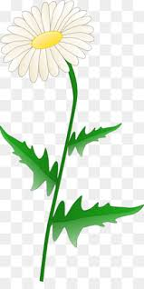 daisy chain png daisy chain flowers
