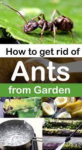 7 natural ways to get rid of ants how