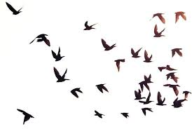 bird flying silhouette. Contemporary Silhouette Bird In Flight Silhouette Out Of  For Flying Y