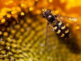 банк обоев обои пчела и медовые соты фото обои для рабочего