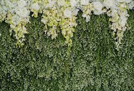 backdrops green grass