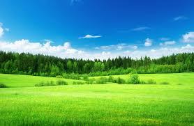 green grass blue sky. Fine Green Blue Sky And Green Grass Intended F