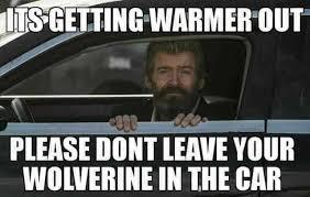 Image result for wolverine meme