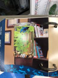 Petco Fish Chart Found In A Petco Betta Fish Guide Which Was Full Of