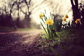 Find the best spring nature wallpapers on wallpapertag. Spring Nature Wallpapers Top Free Spring Nature Backgrounds Wallpaperaccess