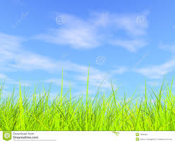 grass and sky backgrounds. Fresh Green Grass On Blue Sunny Sky Background. Foliage, Life. And Backgrounds