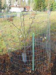 Image Result For How To Keep Deer Away From Fruit Trees  The Keep Deer Away From Fruit Trees