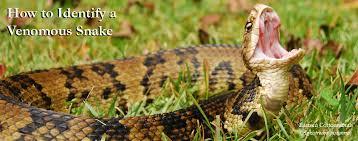 Carolina Reptile Rescue Education Center How To Id A
