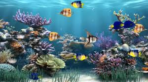 Explore and share the best wallpaper gifs and most popular animated gifs here on giphy. Animated Fish Wallpapers Top Free Animated Fish Backgrounds Wallpaperaccess