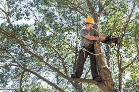 1st terryu0027s tree services llc terrys tree service r83