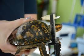 Turtle Tagging Greensboro Science Center