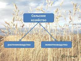 Презентация на тему класс Экономическая география России тема  3 животноводство растениеводство Сельское хозяйство