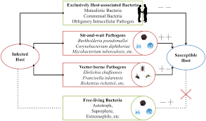 Pathogen Chart Frontiers The Sit And Wait Hypothesis In Bacterial