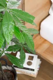 Schlafzimmer Nett Grünpflanzen Im Schlafzimmer Beabsichtigt