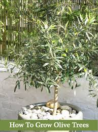 Successful Fruit Tree Pruning  Stark Brou0027sWhen Do You Plant Fruit Trees