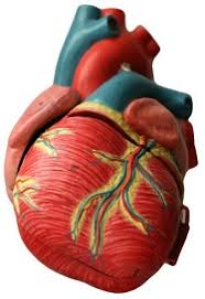 symptoms diagnosis treatment coriell personalized medicine  symptoms diagnosis treatment what are the symptoms of coronary artery disease