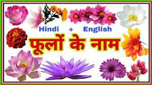 learn flowers name hindi english
