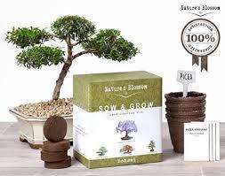 nature s blossom bonsai tree germination kit