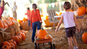 Image result for pumpkin patches