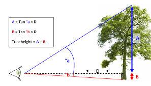 Oak Tree Size Chart Oneoak Project Following The Life Story Of One Oak Tree