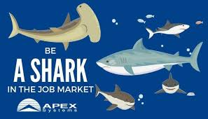eric peacott professional profile happy shark week be a shark in the job market join our