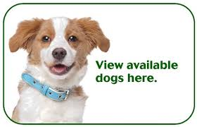 humane society dogs for adoption. On Rare Occasions Viewable Animals May Not Be Available For Adoption Due To Medical Reasons Ownership Or Other Special Circumstances With Humane Society Dogs