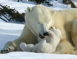 """Résultat de recherche d'images pour """"polar bear day"""""""