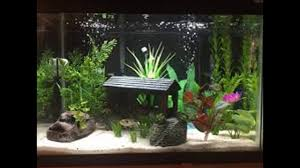 Fish Tank Accessories And Decorations Fish tank decoration ideas plus aquarium decorations tree plus 7