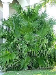 patio palm tree patio palm tree large fan patio palm tree outdoor patio palm tree lights