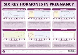 Estrogen And Progesterone Levels In Pregnancy Chart Six Key Pregnancy Hormones And Their Roles Compound Interest