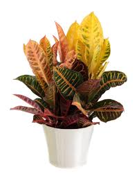 common house plants common houseplants and best indoor plants hgtv best low light office plants