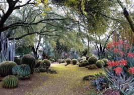 b b cactus farm front garden
