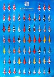 Bilderesultat For Koi Fish Color Chart Koi Fish Colors