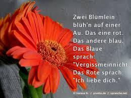 Blumensprüche Top 50 Die Besten Sprüche über Blumen Spruechenet